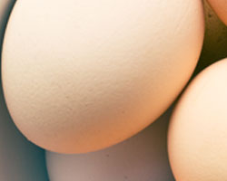 Wholesale Fresh & Free-Range Eggs